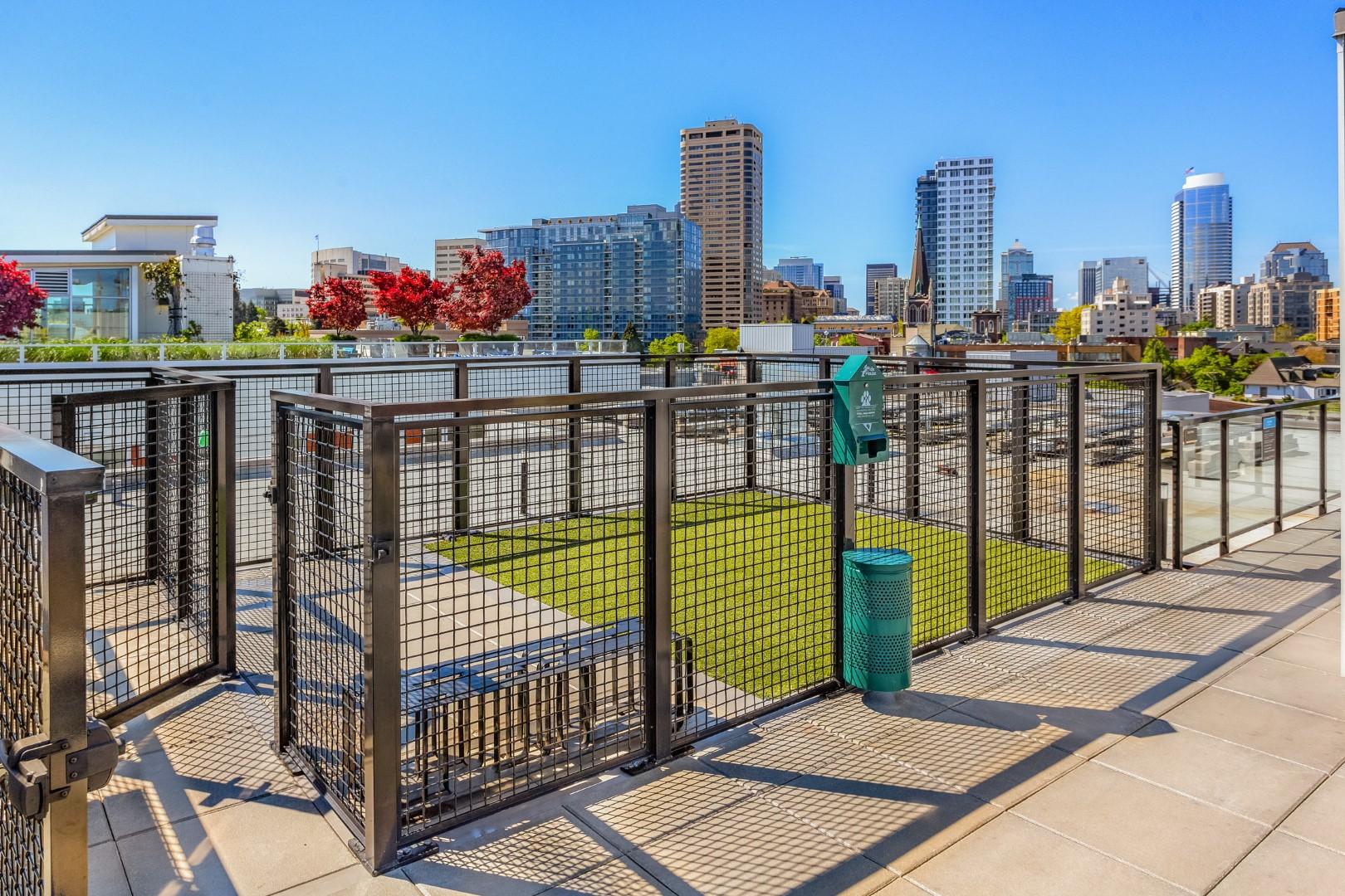 Rooftop Dog Park